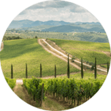 Dievole's vineyards