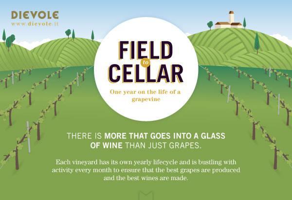 Field-to-cellar_head