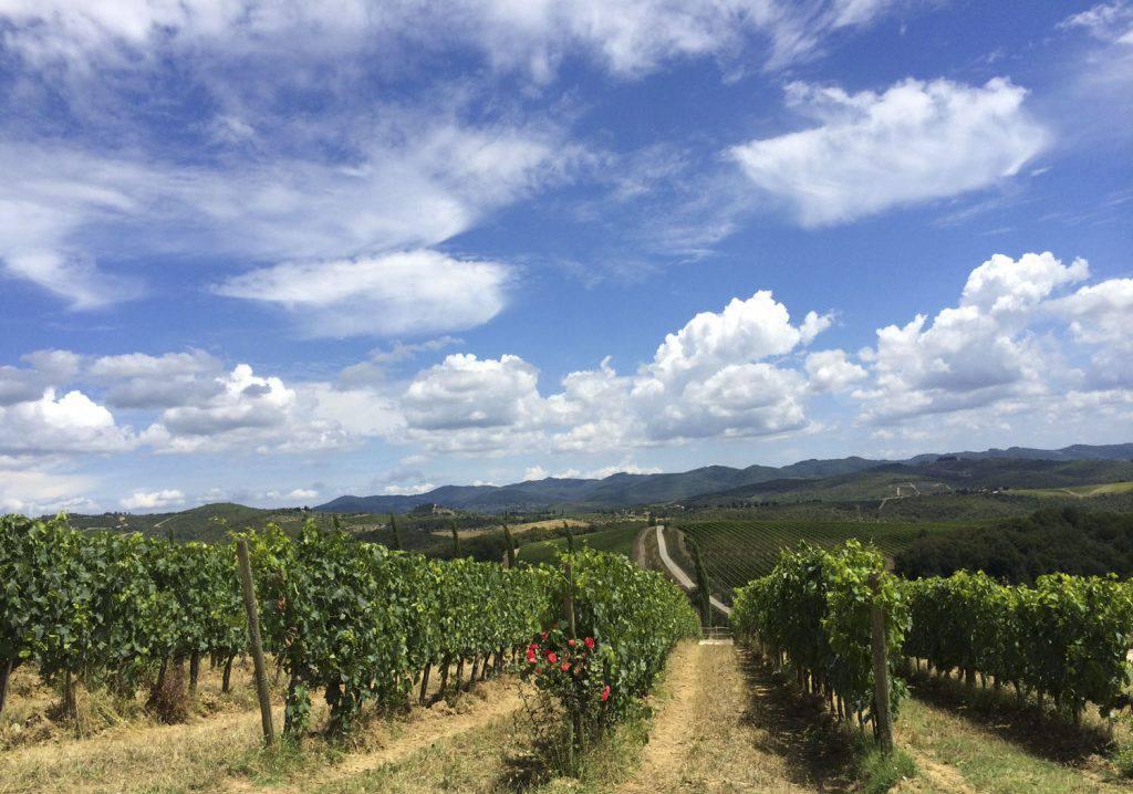 Vines at Dievole