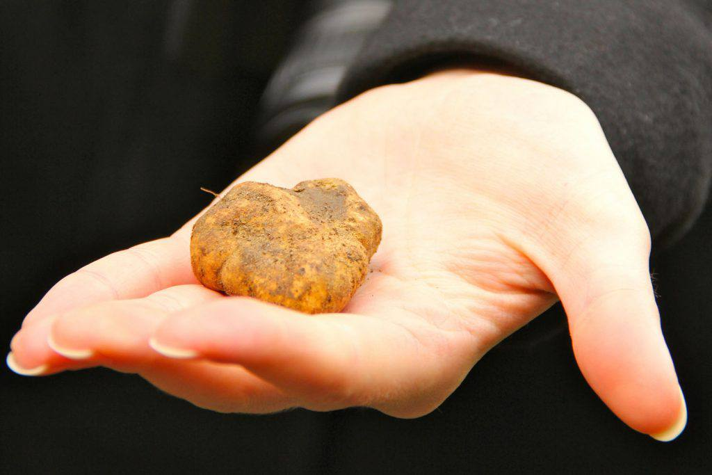 Truffle hunting in Tuscany | Photo Michela Simoncini (Flickr creative commons)