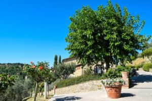 Tuscan ingredient of the month: Mulberry recipes