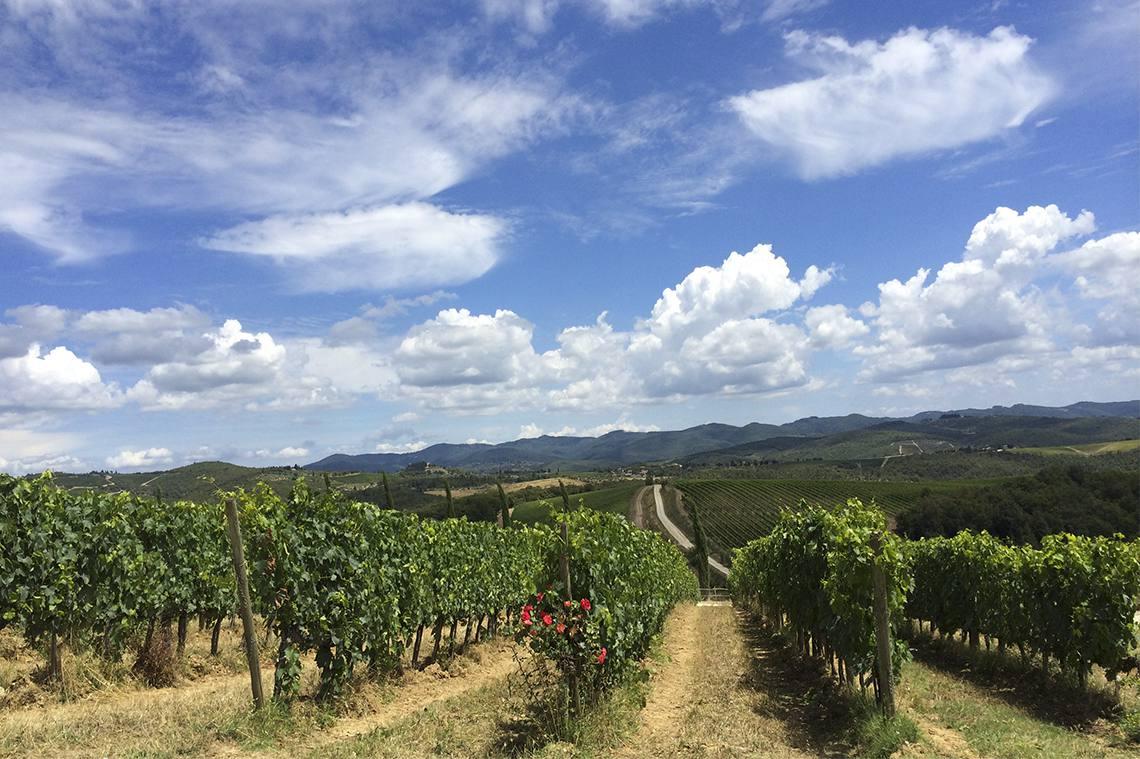 Vineyards - Chianti Valley