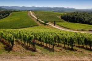 Un viaggio intorno al mondo per gli amanti del vino