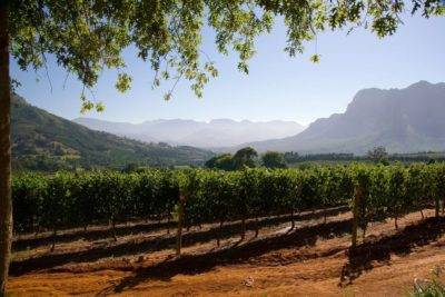 Around the world travel for wine lovers