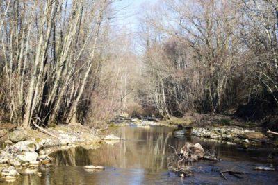The Arbia River