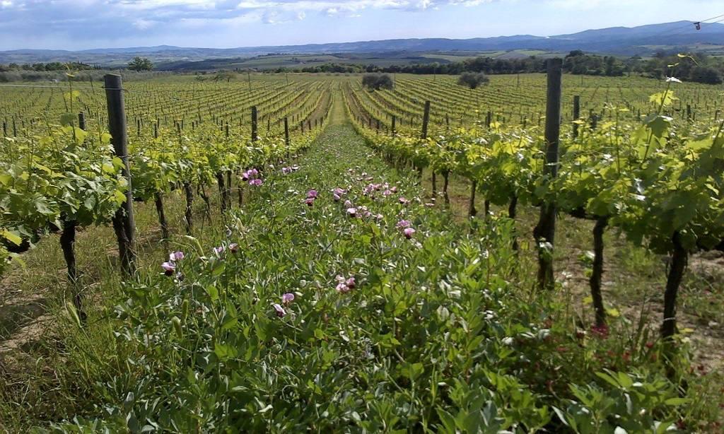Montalcino Wine Tour