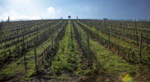 Visitare la Toscana: intervista al nostro direttore Stefano Capurso