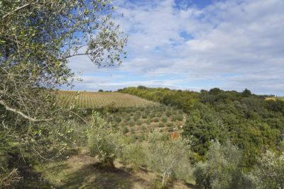 Tocca Stelle: vino e olio dal carattere toscano