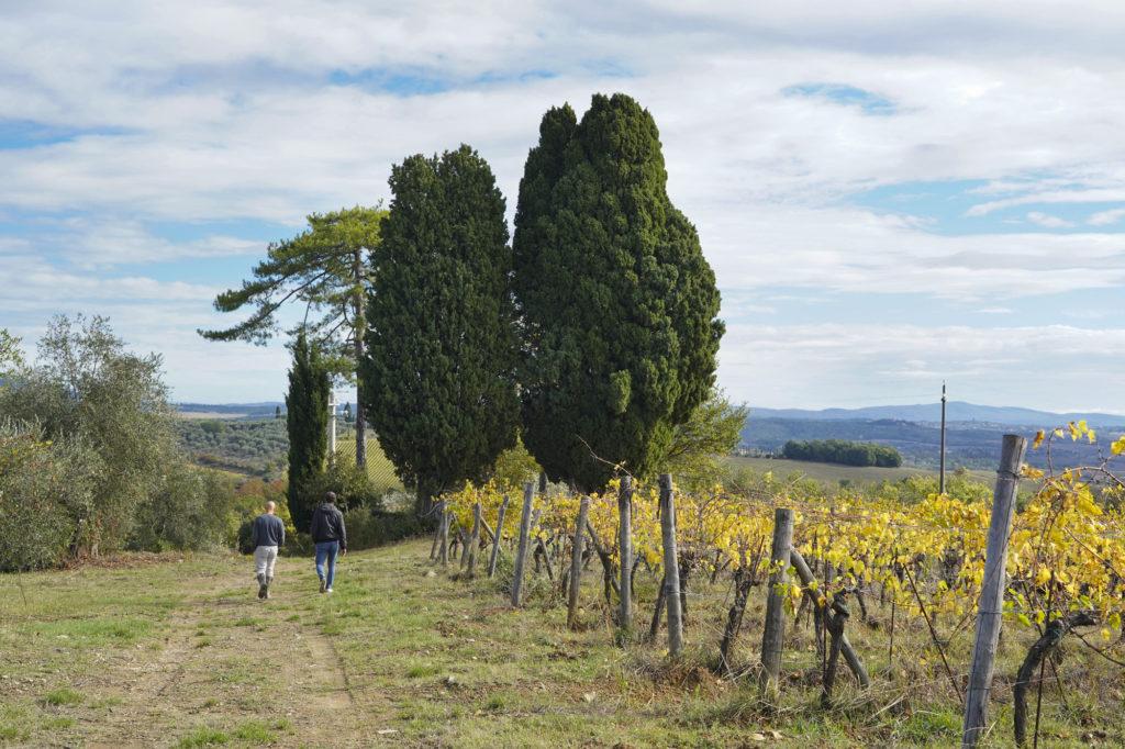 Lorenzo e Matteo tra le vigne e l'oliveta
