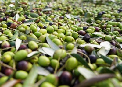 Tipi di olio d'oliva: un quiz per scoprire quello che fa per te