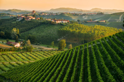 Piedmont Wine Travel Guide: a wine lovers' itinerary in Barolo Territory