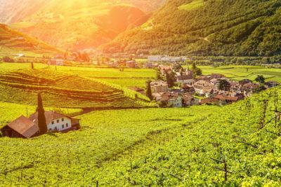 Alto Adige per gli amanti del vino: terra del Gewürztraminer